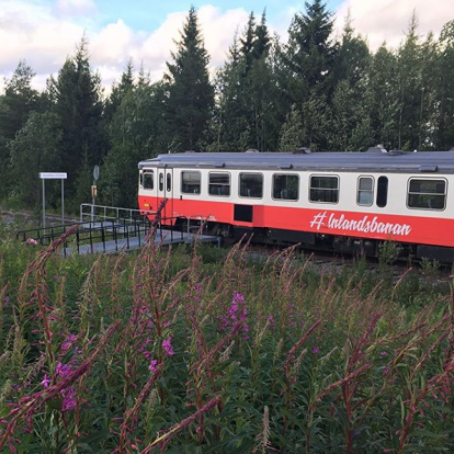 Willow herb and rail car