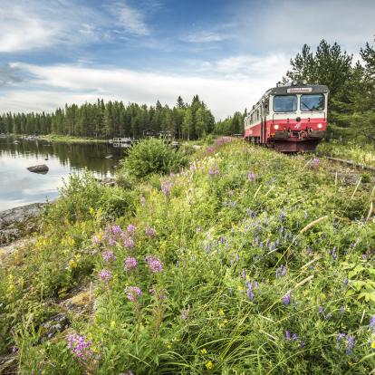 Inlandsbanan blommig banvall i Ulriksfors