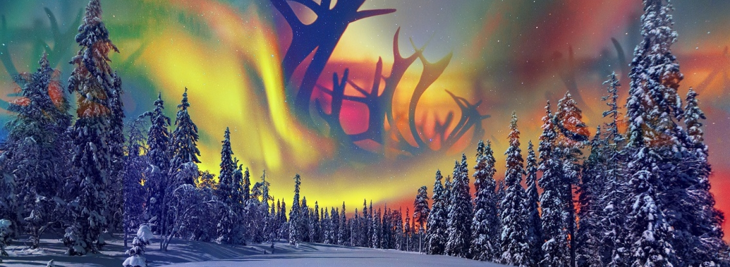 Northern lights and snowy forest montage